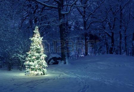 36234166 weihnachtsbaum im schnee hof s mmermann. Black Bedroom Furniture Sets. Home Design Ideas